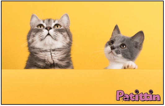 İlk Kez Kedi Sahipleneceklere Tavsiyeler