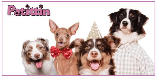 Köpekler Hakkındaki Bilinmeyen Gerçekler