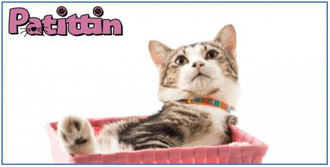Kediler Anlaşılması Zor Canlılar mıdır?