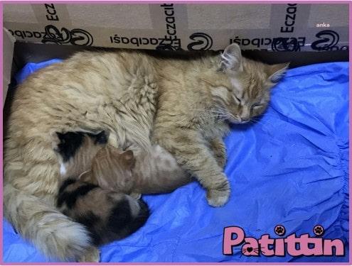 İzmir'de Anne Kedi Yavrularını Hastaneye Götürdü
