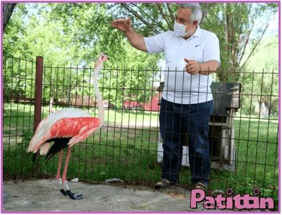 ayağı yanan flamingoya protez bacak yaptı