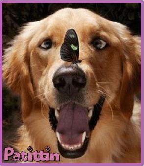 Köpeklerin karmaşık duyguları var mıdır