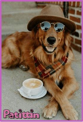 köpeklerin insanlardan daha iyi yaptığı şeyler