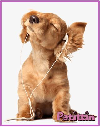 köpeklerin-işitme-duyusu-