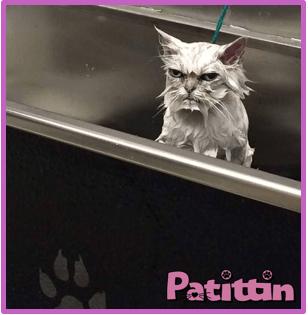 kedilerin-nefret-ettiği-şeyler