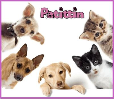 kedi köpek kısırlaştırma