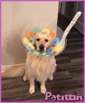 köpek kısırlaştırma