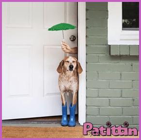 köpekler-doğa-olaylarini-hisseder