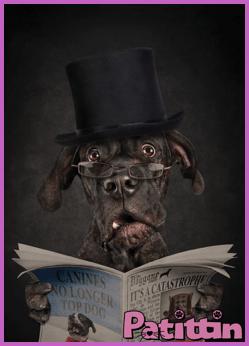 köpekler-duygulari-hisseder