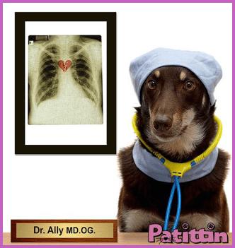 köpekler-hastaliklari-hissedebilir