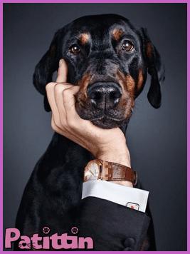 köpeklerin hissedebileceği şeyler